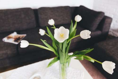 White tulips on the table
