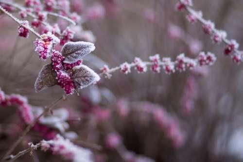 Winter frost 7