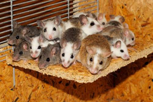 A group of mice on a piece of wood free photo