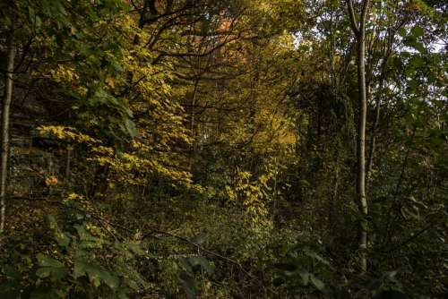 Autumn Foliage leaves in Pewit's Nest, Wisconsin free photo