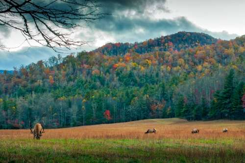 Autumn forest with Elk in the foreground in North Carolina free photo