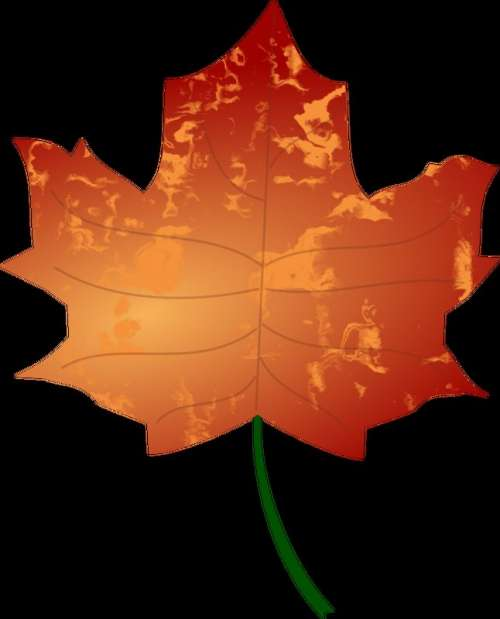 Autumn Leaf vector files free photo