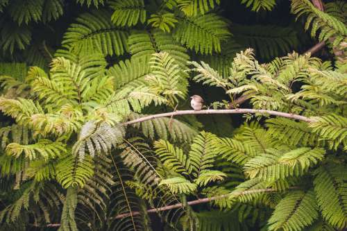 Bird Wildlife with leaves in Madagascar free photo
