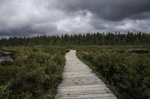 Boardwalk into the Bog at Algonquin  Provincial Park, Ontario free photo