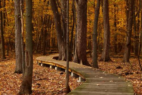 Boardwalk through the forest in Quebec, Canada free photo