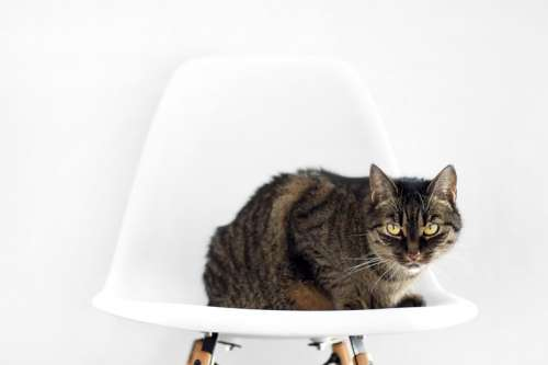 Cat sitting on chair free photo
