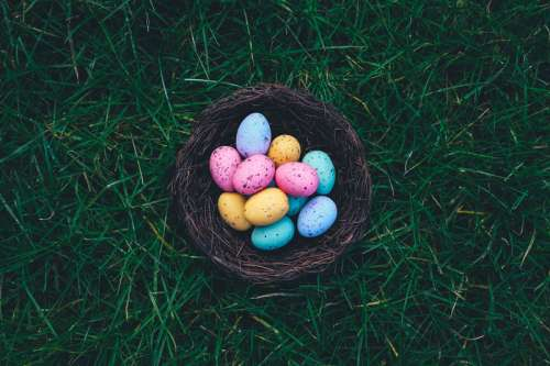 Colored Easter Eggs in Nest free photo