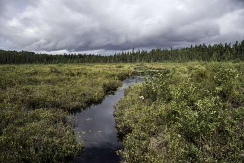 Creek flowing through the bog landscape at Algonquin Provincial Park, Ontario, Canada free photo