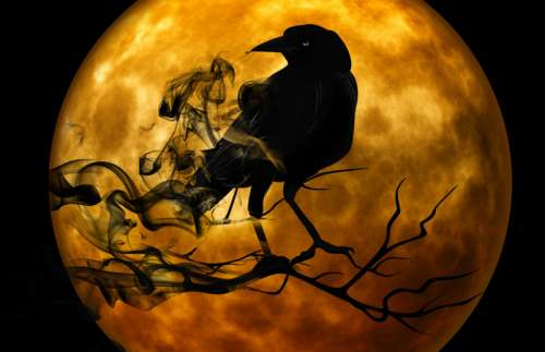 Crow standing on Branch in front of full moon scary Halloween Scene free photo