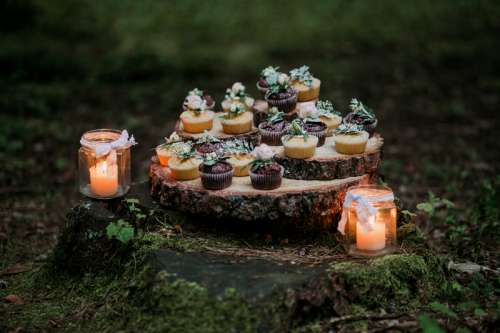 Cupcakes and candles in the woods free photo