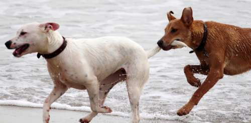 Dog with other dog's tail in mouth free photo