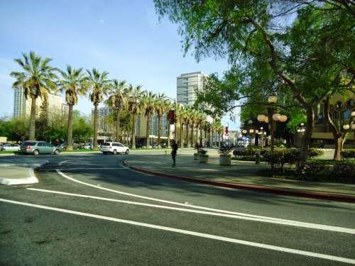 Downtown San Jose with trees and street in San Jose, California free photo
