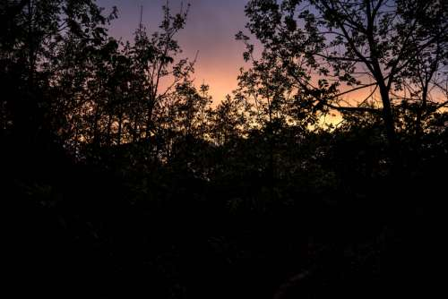 Dusk Beyond the Trees free photo