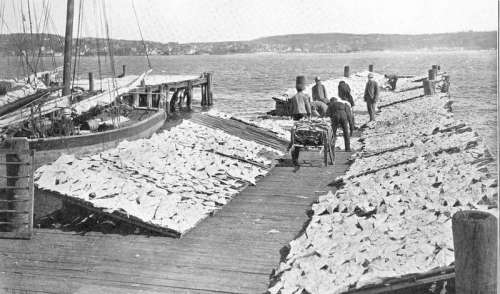 Fish Drying on the Wharf in Halifax, Nova Scotia, Canada free photo