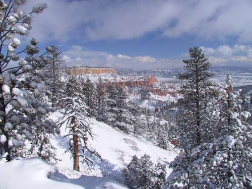 Fir Forests landscape in Bryce Canyon National Park, Utah free photo