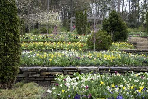 Flowers in Terraces in Duke University in Durham, North Carolina free photo
