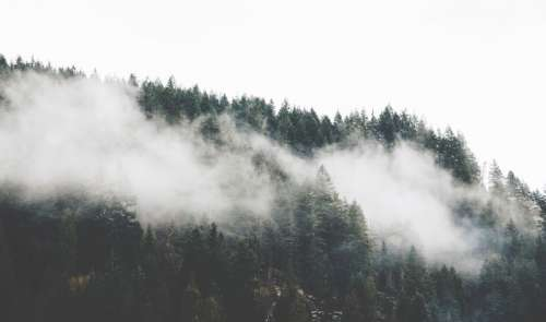 Fog over the trees in the forest in Vancouver, British Columbia, Canada free photo