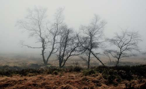 Foggy and Swampy Landscape in Belgium free photo