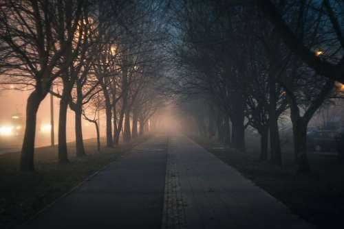 Foggy Walkway through a Corridor of Trees free photo