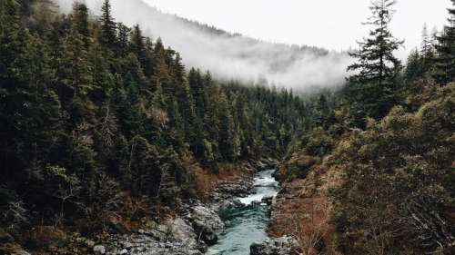 Forest and stream and trees with fog in California free photo