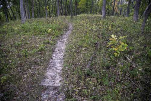 Forested Trail at Ferry Bluff, Wisconsin free photo