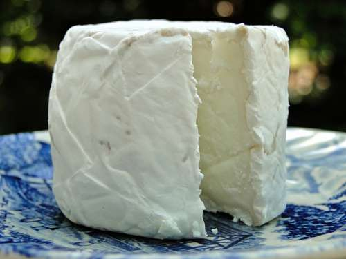 Fresh Goat Cheese free photo