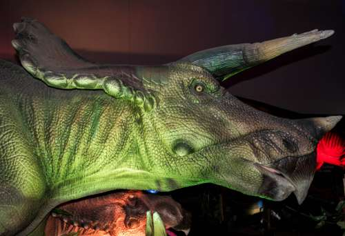 Head of Triceratops free photo