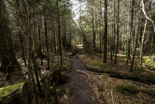 Hiking path scenery towards Clingman's Dome in Smoky Mountains National Park, Tennessee free photo