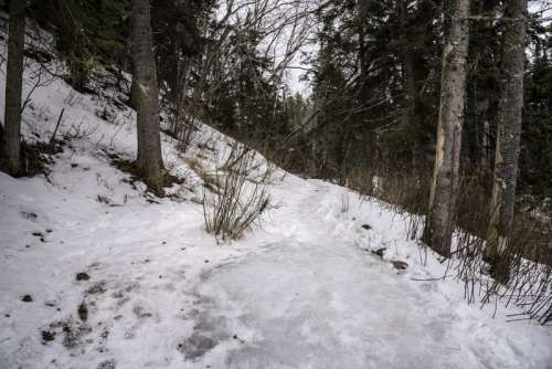Hiking path through the snow in the forest at Cascade River State Park, Minnesota free photo