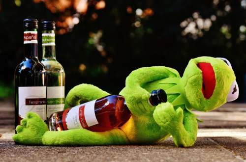 Kermit with a bottle of wine free photo