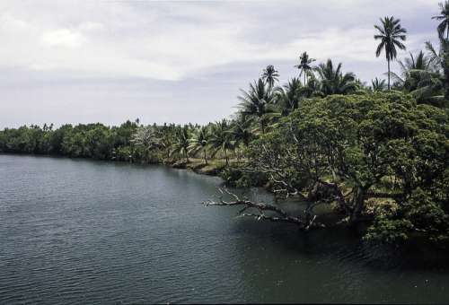 Landscape and forest at the Riverbank in the Philippines free photo
