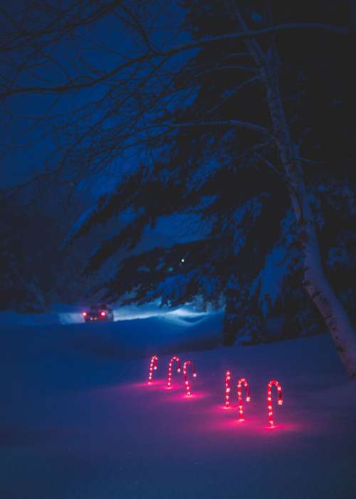 Lighted Candy Canes in the snow Christmas Decorations free photo