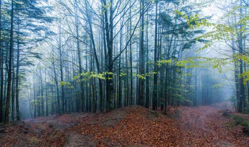 Misty woods and trails in Ukraine free photo