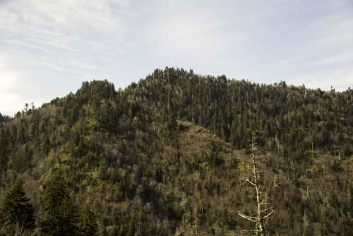 Mountains under the sky landscape in Great Smoky Mountains National Park, Tennessee free photo