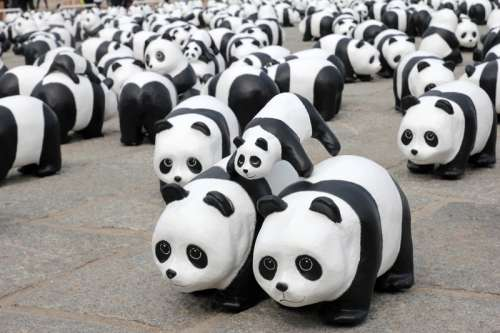 Panda Bear Herd toys free photo