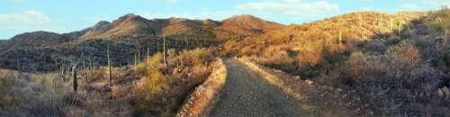 Panorama landscape of Saguaro National Park, Arizona free photo