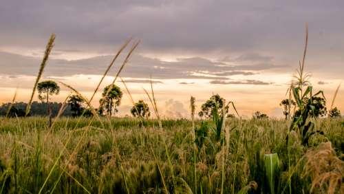Grass Fields landscape in Argentina free photo