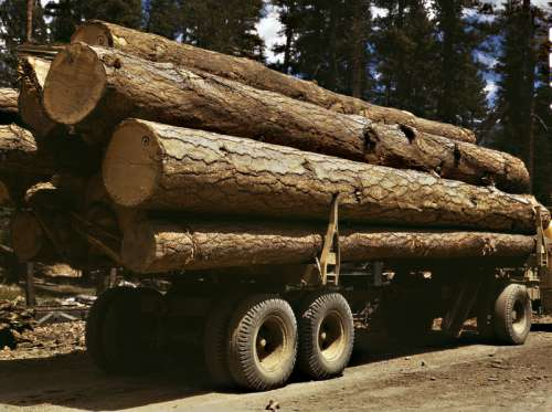 Pine Logs on a truck in Burns, Oregon free photo
