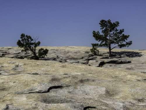 Pine trees near Stone Mountain in Atlanta, Georgia free photo