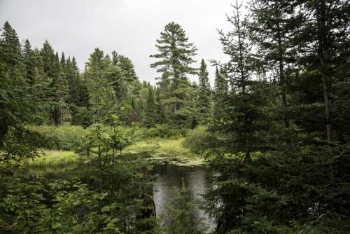 Pond and forest at Algonquin Provincial Park, Ontario free photo