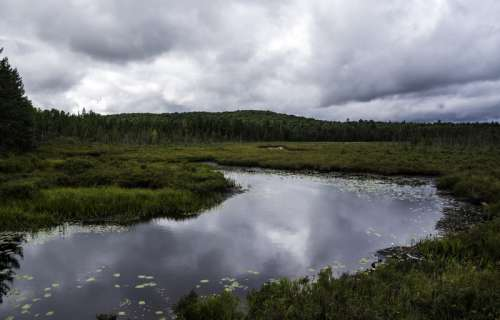 Pond and nature landscape in Algonquin Provincial Park, Ontario free photo