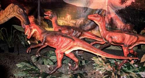 Raptor hunting Pack free photo