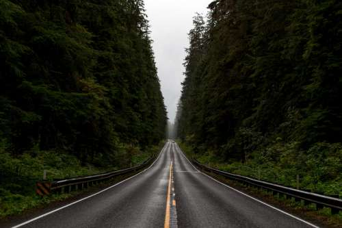 Road Corridor through Olympic National Forest, Washington free photo