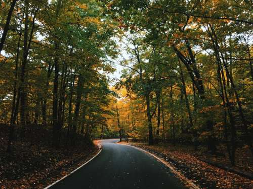 Road through the trees in Harbor Springs, Michigan free photo
