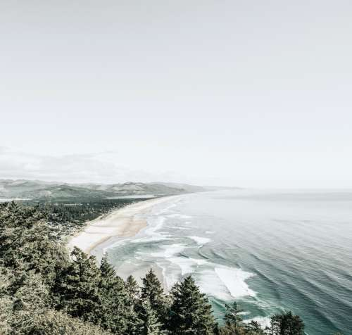 Shoreline landscape with beach and forest in Oregon free photo