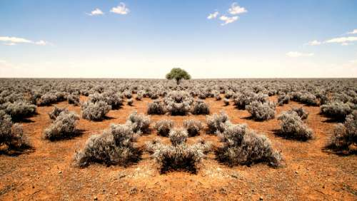 Shrubs on the ground and tree in the middle at World's End in South Australia free photo