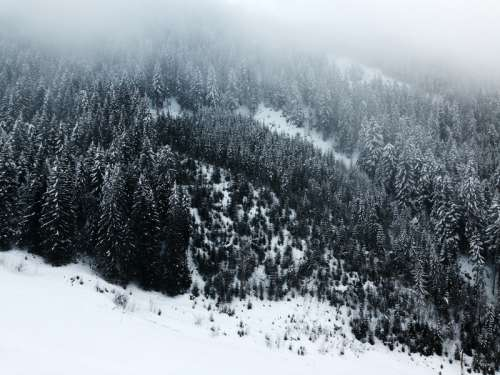 Snow-covered Pine Forest in the Mountains free photo