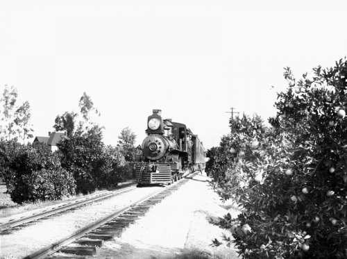 Southern Pacific Railroad train through an orange grove in Riverside, California free photo