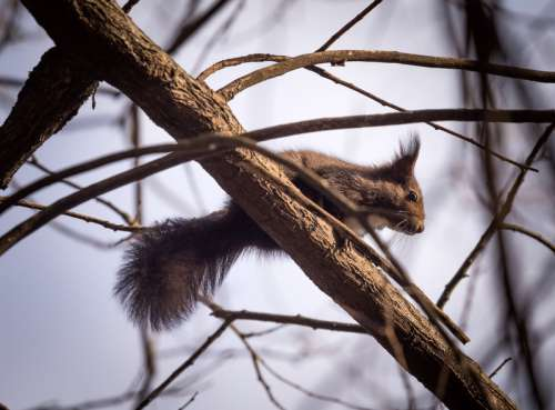 Squirrel in a tree in the wild free photo