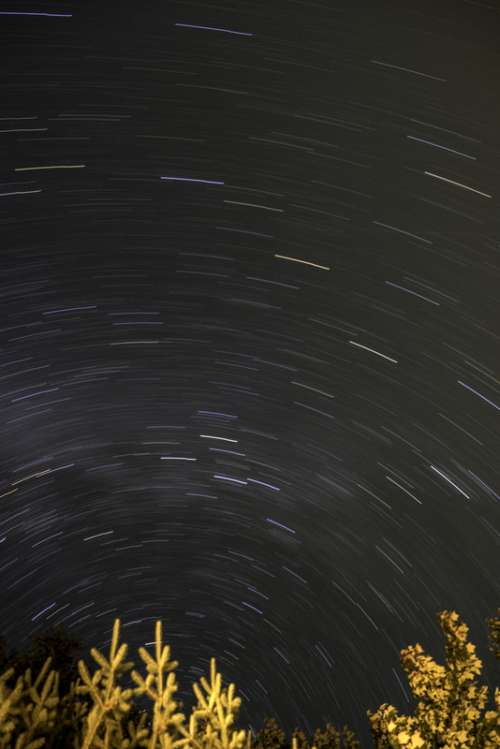 Star Trails above the trees at Algonquin Provincial Park, Ontario free photo